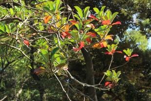 はっぱの色が変わってる~ 秋だねぇ~